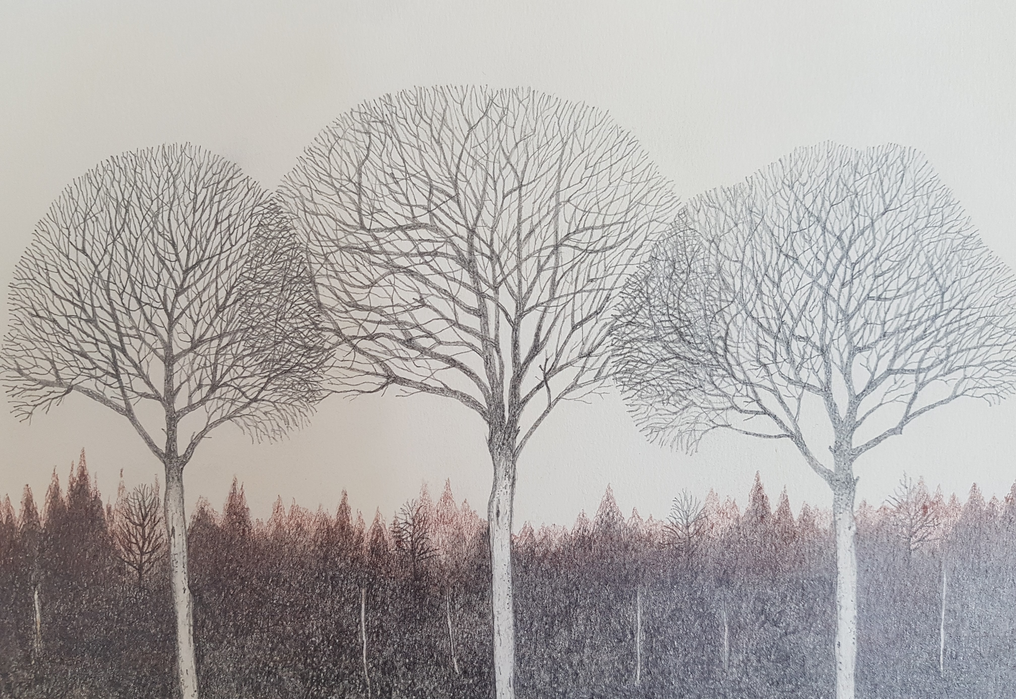 Overlapping trees P12